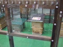 銀座で養蜂見学に参加