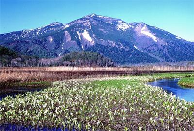 ミズバショウの咲く尾瀬ヶ原と至仏山