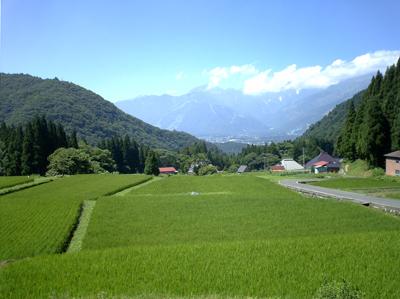 長野県白馬村の山間に拡がる棚田の眺め