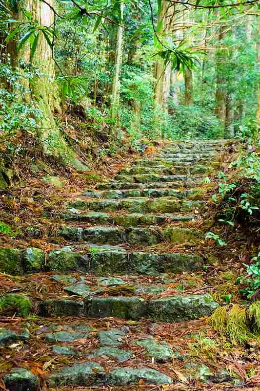 【写真2】熊野古道のルートの1つ「中辺路」